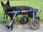 Large 4 Wheel Pet Wheelchair