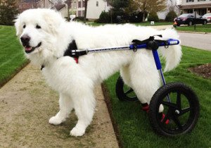 Large Dog Wheelchair