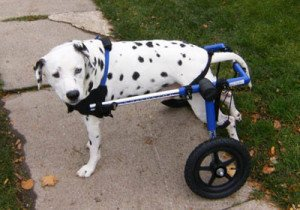 Medium Dog Wheelchair