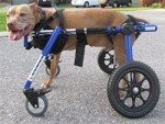Medium 4 Wheel Pet Wheelchair