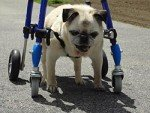 Mini 4 Wheel Pet Wheelchair