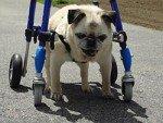 Mini 4 Wheel Pet Wheelchair