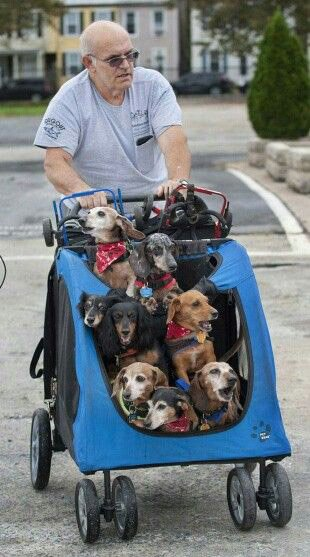 Small Dog Stroller