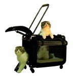Cat Pushchair